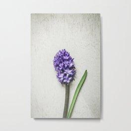 Lilac Hyacinth Metal Print