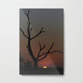 Tree in the solitude Metal Print