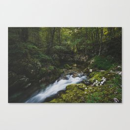 Mostnice Forest - Slovenia Canvas Print