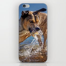 Dogs with the game face on .48 iPhone Skin