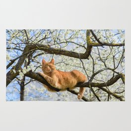 Beautiful ginger cat on plum tree. Rug