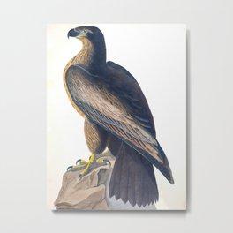 Bird Of Washington Illustration Metal Print