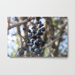 Wild Grapes Metal Print