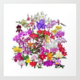 A celebration of orchids Art Print