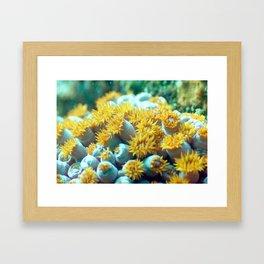 Field of yellow flower anemone Framed Art Print
