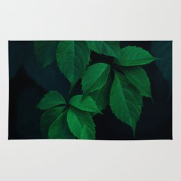 Leaves by Rodion Kutsaev Rug