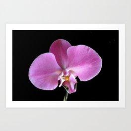Pink Orchid Flower Closeup Art Print