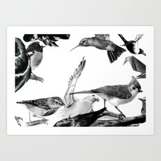 A Volery of Birds Art Print