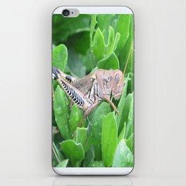 beauty in the mundane - grasshopper iPhone Skin