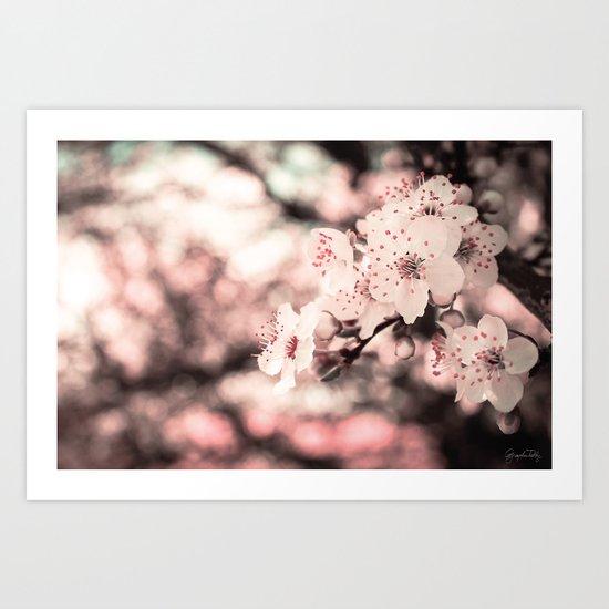 Sweet Spring (White Cherry Blossom) Art Print