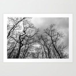 Black and white naked trees silhouette Art Print