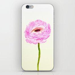 pink cultivited buttercup, Ranunculus iPhone Skin