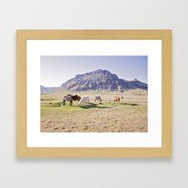 Colorful Horse Photograph Framed Art Print