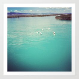 Pelicans on the Blue Lake Art Print