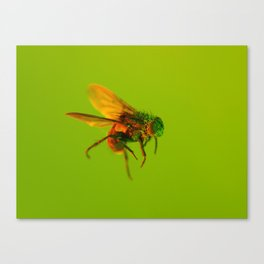 Bugged #11 Canvas Print
