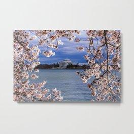 """""""Jefferson through the Blossoms"""" - DC Cherry Blossom Festival Metal Print"""
