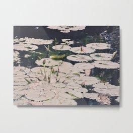 Water lilys Metal Print