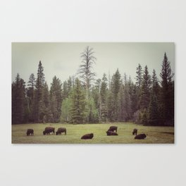 Grand Canyon Buffalo Canvas Print