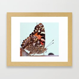 Butterfly Beauty with soft oil Framed Art Print