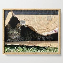 Sad Box Kitty (Lanai Cat's Sanctuary) Serving Tray