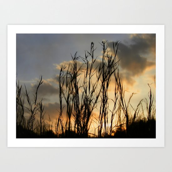 Last Light Art Print