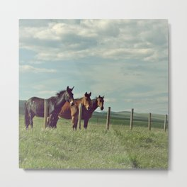 (Not So) Wild Horses Metal Print