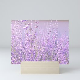 lavender dream Mini Art Print