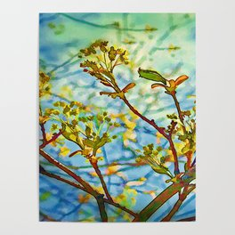 Budding Branches Poster