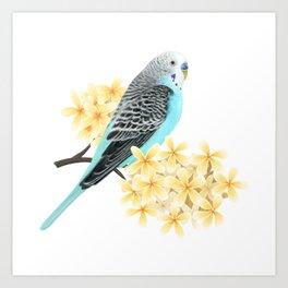 Blue Budgerigar Art Print