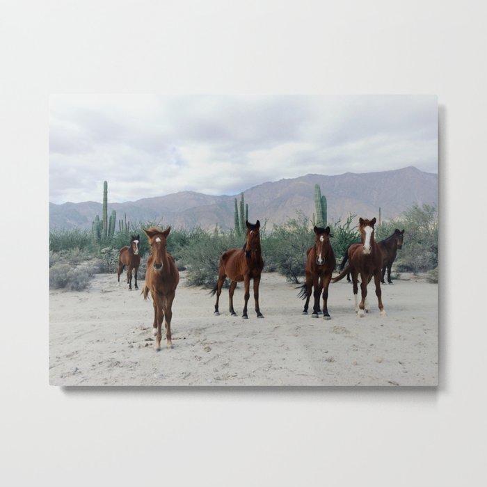 Bahía de los Ángeles Wild Horses Metal Print