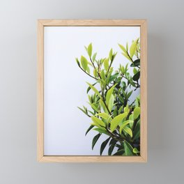 Green Leaves Framed Mini Art Print