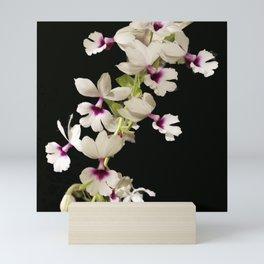Calanthe rosea Orchid Mini Art Print