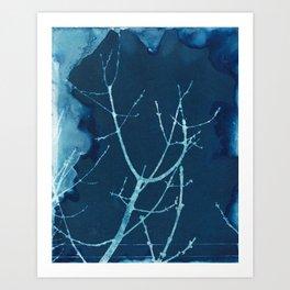 Silent Branches Cyanotype Art Print