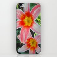 tulips iPhone & iPod Skins featuring Tulips by Vitta