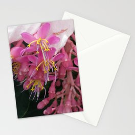 Mount Kinabalu's Medinilla Stationery Cards