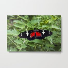 Black and Red Butterfly - Insect Photography Metal Print