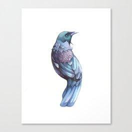 Tui Bird Canvas Print