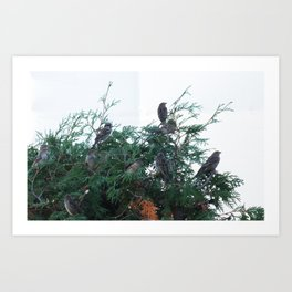 Fir Flock Art Print