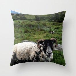 Scottish Highland Sheep Throw Pillow