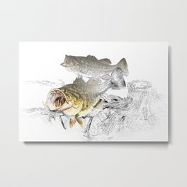 Largemouth Black Bass Fishing Art Metal Print