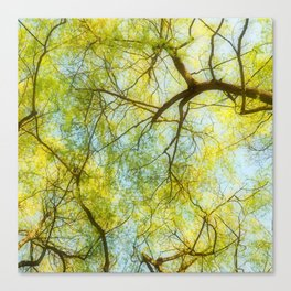 Willow Canopy Canvas Print
