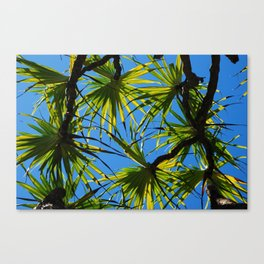 Palm Branches Canvas Print