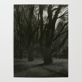 Old trees near Swans Lake, Seaside Park, Saint Petersburg Poster