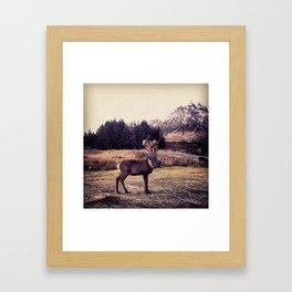 Scottish Highlands: Majestic Framed Art Print