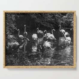 Pink flamingos in a pond Serving Tray
