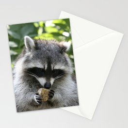 Raccoon_20150115_by_JAMFoto Stationery Cards