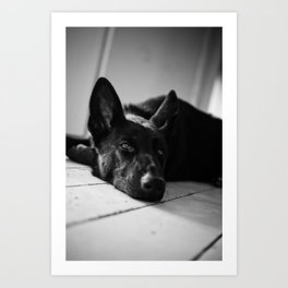 Dog German Shepherd  Art Print