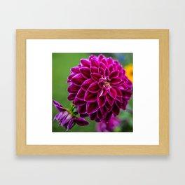 Dark Pink Flower Framed Art Print