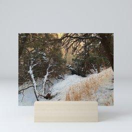 Carson Forest  Mini Art Print