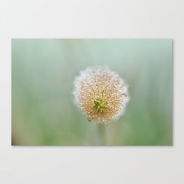 Early morning dew - 2 Canvas Print